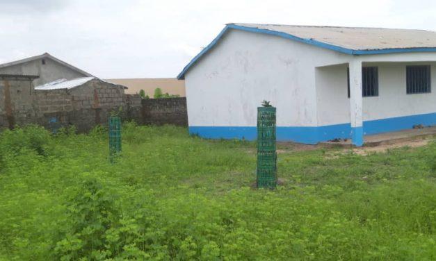 Busumbala Nursery School Update – August 2021 – Tree Planting